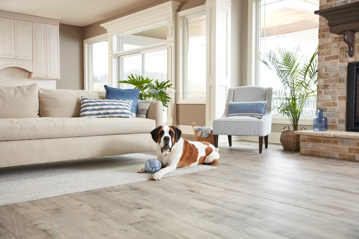 Dog on hardwood floo
